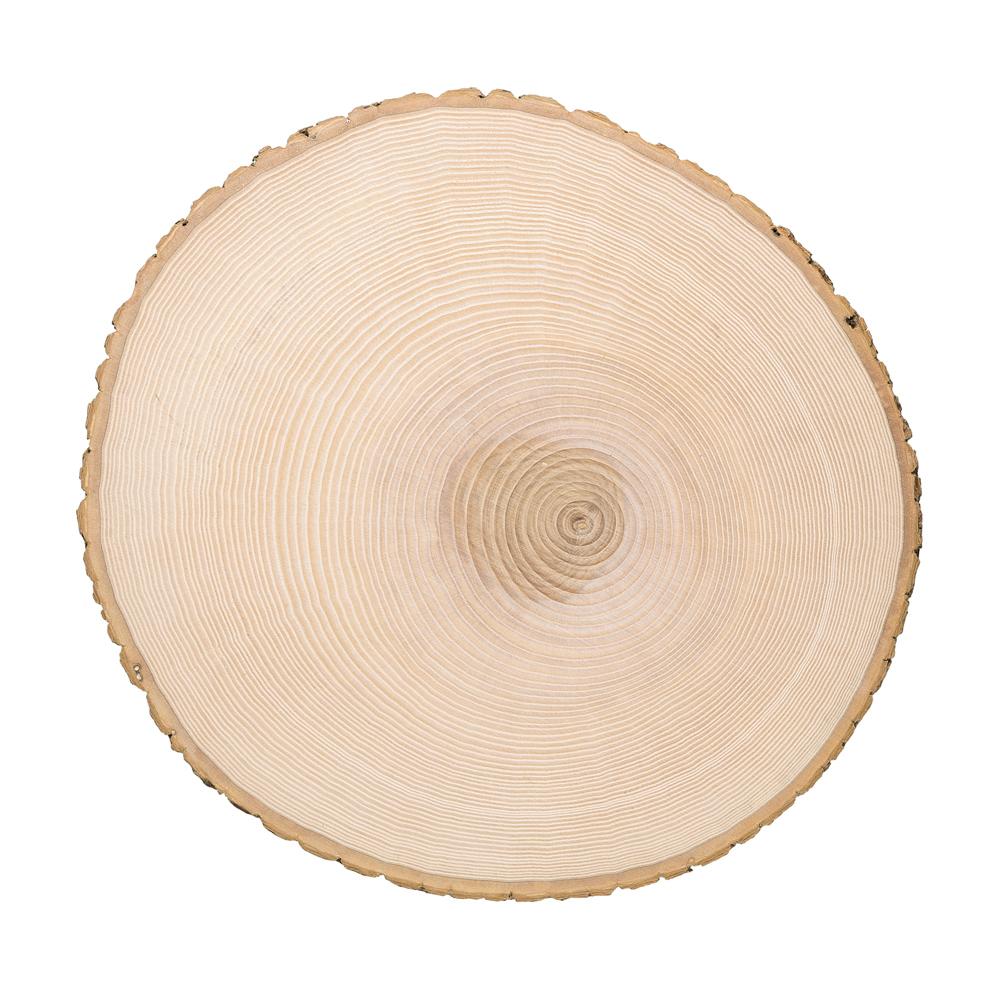 Riesenbaumscheibe